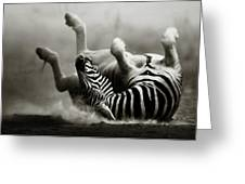 Zebra Rolling Greeting Card