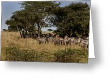Zebra Seeking Shade Greeting Card