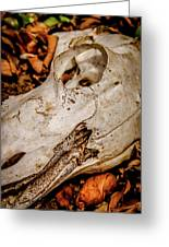 Zebra Skull Greeting Card