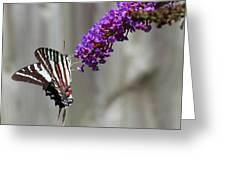 Zebra Swallowtail Butterfly 2 Greeting Card