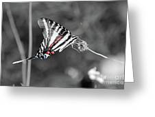 Zebra Swallowtail Butterfly 2016 Greeting Card