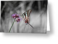 Zebra Swallowtail Butterfly And Stripes Greeting Card