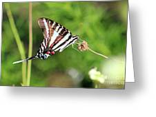 Zebra Swallowtail Butterfly In Garden 2016 Greeting Card