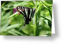 Zebra Swallowtail Butterfly In Green Greeting Card