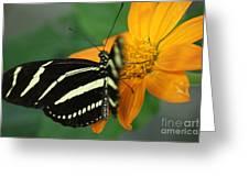 Zebra Wing Profile...   # Greeting Card