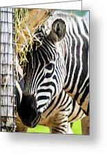 Zebra Zee Greeting Card