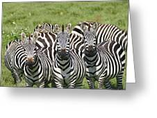 Zebra10 Greeting Card