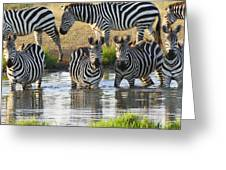 Zebra15 Greeting Card