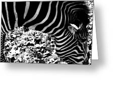 Zebra2 Greeting Card