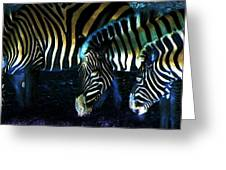 Zebras Glow Greeting Card