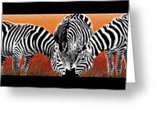 Zebras In Sunset Field Greeting Card