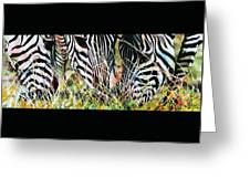 Zebras In The Grass Greeting Card