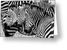 Zebras Triplets Greeting Card