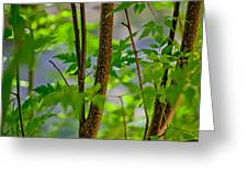 Zen Forest Greeting Card