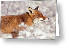 Zen Fox Series - Happy Fox IIn The Snow Greeting Card