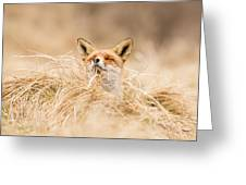 Zen Fox Series - Zen Fox 2.7 Greeting Card