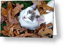 Zen Moment Greeting Card