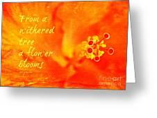 Zen Proverb 3 Greeting Card