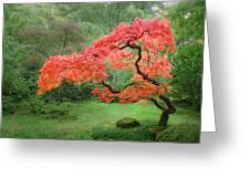 Zen Tree Greeting Card