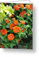 Zesty Zinnias Greeting Card