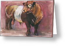Zeus  Red Belted Galloway Bull Greeting Card