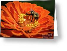 Zinnea With Honeybee Greeting Card