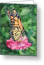 Zinnia And Monarch Greeting Card by Judy Loper