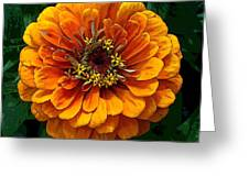 Zinnia At Frankenmuth Greeting Card