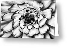 Zinnia Close Up In Black And White Greeting Card