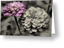 Zinnia Flower Pair Greeting Card