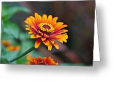Zinnia Flowers Greeting Card
