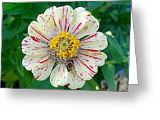 Zinnia Guest Greeting Card