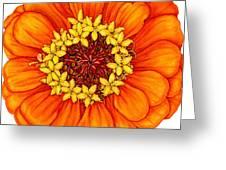 Zinnia In Orange Greeting Card