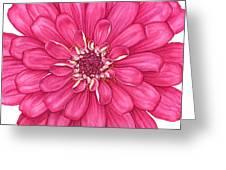 Zinnia In Pink Greeting Card