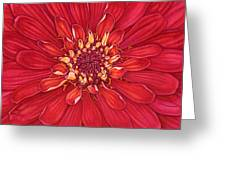 Zinnia In Red Greeting Card