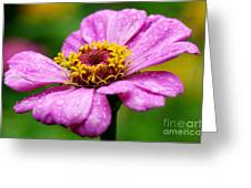 Zinnia In The Rain Greeting Card