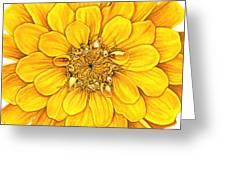 Zinnia In Yellow Greeting Card