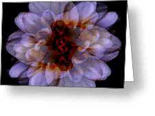 Zinnia On Black Greeting Card