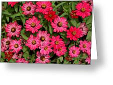 Zinnia Riot Watercolor Greeting Card