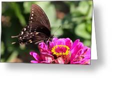 Zinnia Visitor 4 Greeting Card