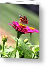 Zinnia Visitor Greeting Card