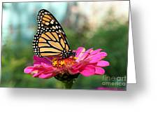 Zinnia With The Monarch Greeting Card by Steve Augustin