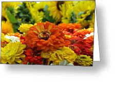 Zinnias With Sunflowers Greeting Card