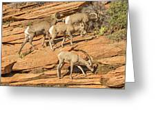 Zion Big Horn Sheep Greeting Card