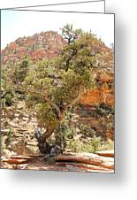 Zion Hike 1 View 1 Greeting Card