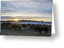 Zion Mountain Ranch Buffalo Herd Greeting Card