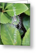 Zipper Spider Greeting Card