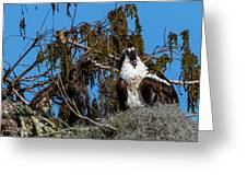 Zombie Osprey Crying For Brains Greeting Card