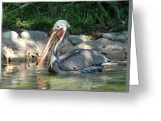 Zoo 28 Greeting Card