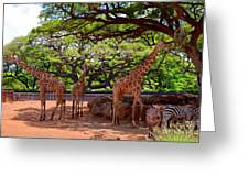 Zoo Giraffes And Zebras Greeting Card